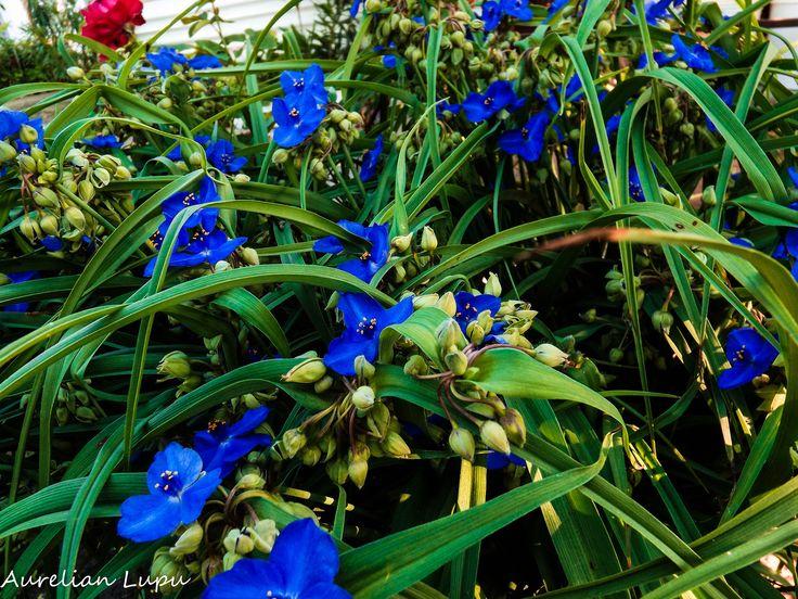 Spring by Aurelian Lupu on 500px