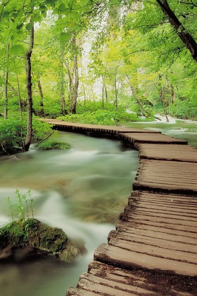 Solitude in Plitvice National Park,  the oldest national park in Southeast Europe and the largest national park in Croatia.