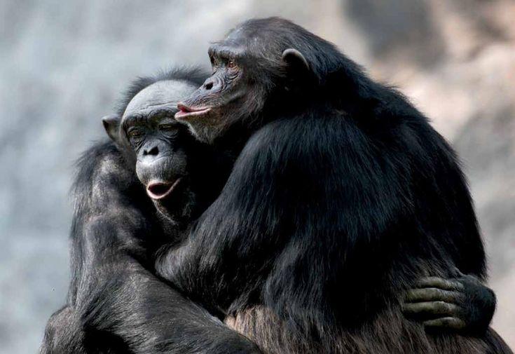 Zoólogos y primatólogos descubren que los seres vivos no humanos también son religiosos y espirituales. <br>Texto: Miguel Pedrero</br>