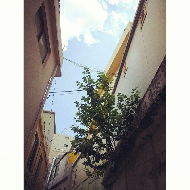 angelina_ysj 어떤 골목 길을 지나다 보면... 이렇게 틈새에서 자라고 있는 나무를 보게되는되요... 웬지 위태하면서도 안쓰럽고 희망에 차게되는건 왜일까요.. / 부산 / #골목 #담벼락 #식물 #하늘 / 2013 07 20 /