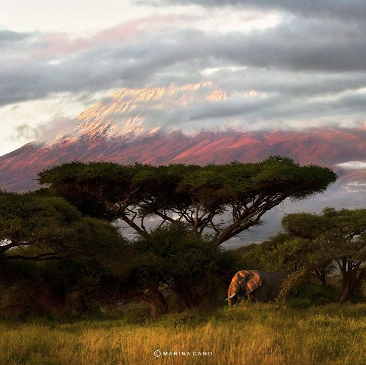 African landscape by Marina Cano
