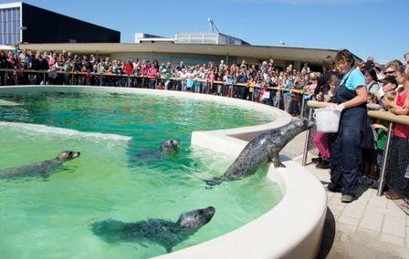 Tips voor Kids Texel is een ideaal vakantie-eiland voor kinderen. Er is zo veel te beleven! De zeehondenopvang, en ook de bruinvissen en Walviszaal, van Ecomare mag je natuurlijk niet missen als je op Texel bent.