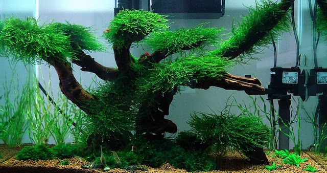tree layout cube for shrimp pinterest trees aquarium and ideas