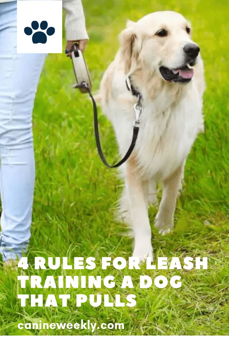 How To Leash Train A Puppy And Stop That Pulling Dog Training