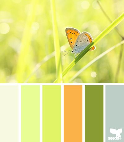 Winged Palette from Design Seeds