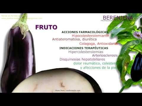Berenjena. Propiedades medicinales - Farmacognosia. Plantas medicinales