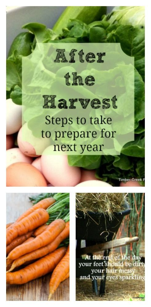 After the Harvest - 6 Steps to Take to Prepared for Next Year
