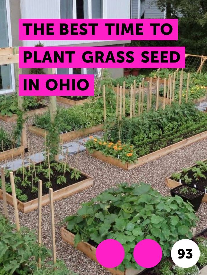 The Best Time To Plant Grass Seed In Ohio Growing Vegetables