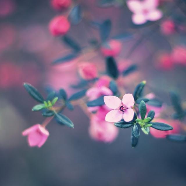Best Iphone X Wallpaper: 40 Best Images About IPad Mini Wallpaper On Pinterest
