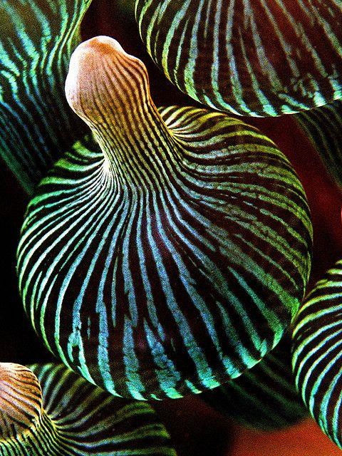 Vivid | Mixed | Color | Colour | цвет | カラー | Couleur | Colore |  anemone