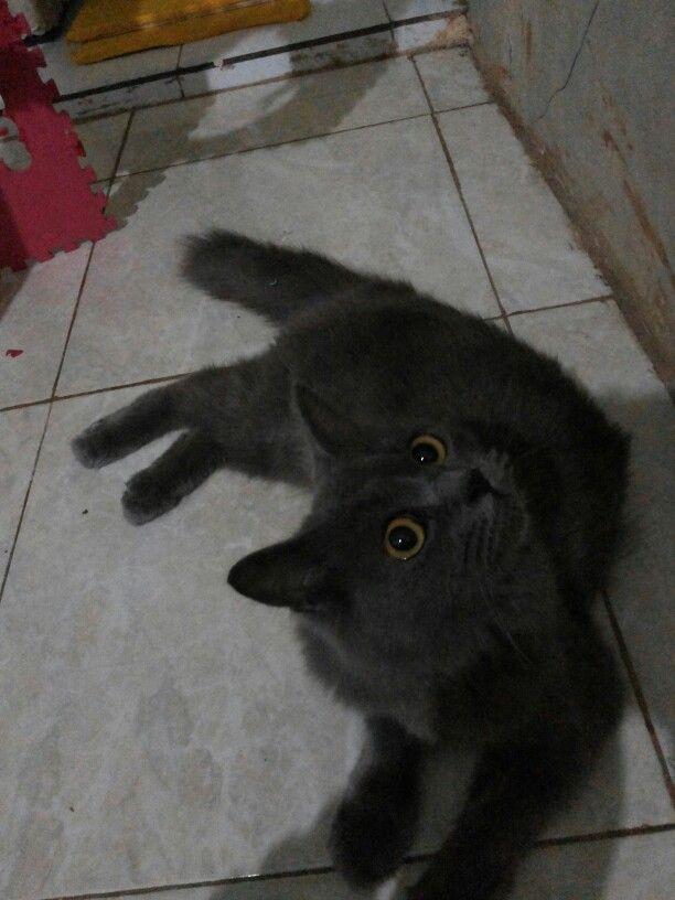 #cat #grey #fotography