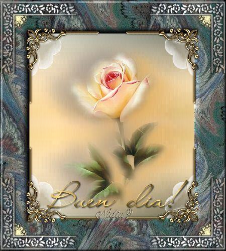 Buen día con rosa.  www.abuelosmodernos.com