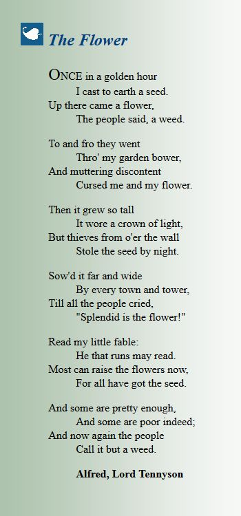 The Flower - Alfred Lord Tennyson❤️
