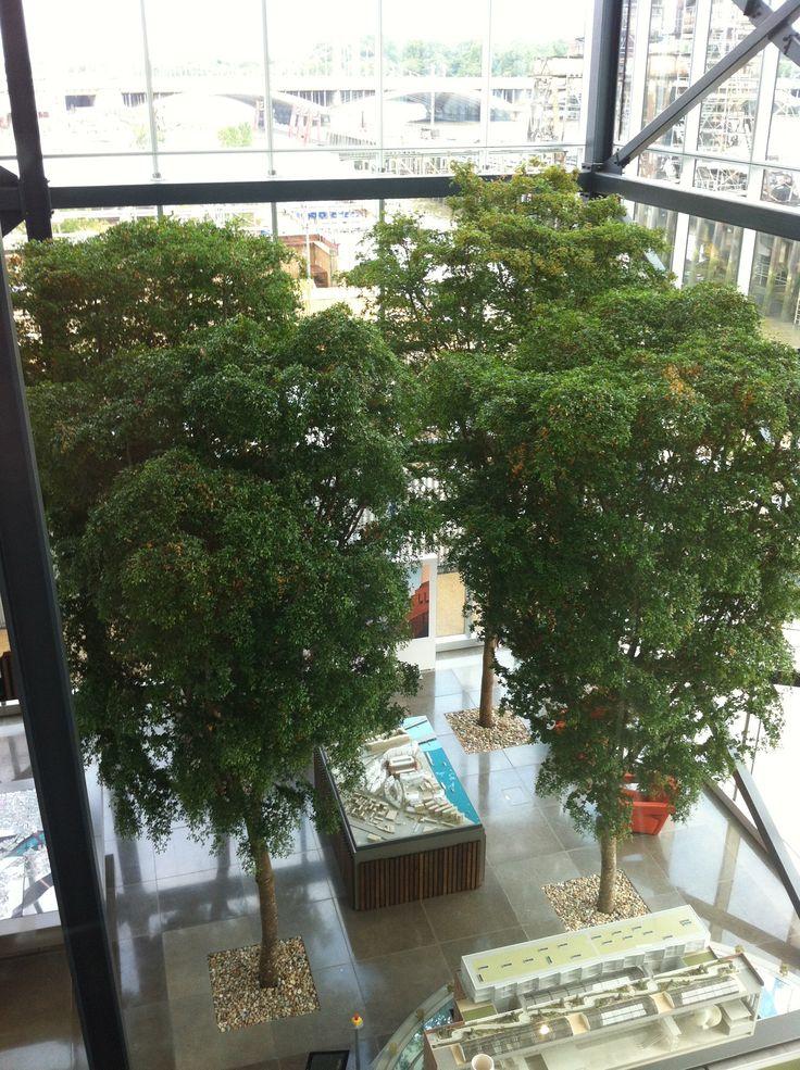 4 specimen 8m Black Olive trees make an impressive statement in this office atrium space