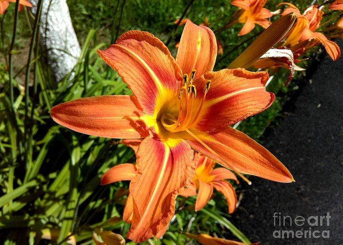 Orange Lilies Greeting Card featuring the photograph Orange by Erika H