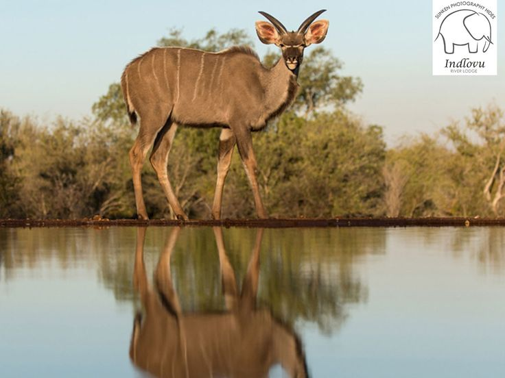 Our unique sunken photography hides creates the opportunity for photographers to capture close up images, taken from the water level of the waterholes.  View our photography packages here: http://ow.ly/RmZs3067OSQ