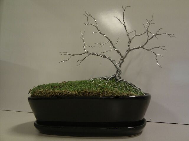 For Sale - Silver Bonsai Style - 20cm tall - $70 CAD ***SOLD***