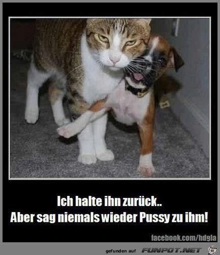 lustiges Bild 'Hund und Katze.jpg' von Kruemel. Eine von 61029 Dateien in der Kategorie 'Lustiges' auf FUNPOT.