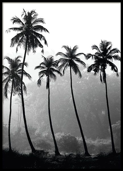 Fotokonst online | Svartvita fotografier | Fotoposter | Konstfoto | Desenio
