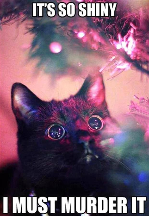 Pretty well sums up my cats during the holidays :)