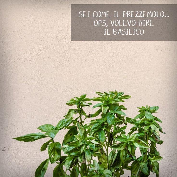 pianta di basilico | basil | orto | spezie | cucina italiana