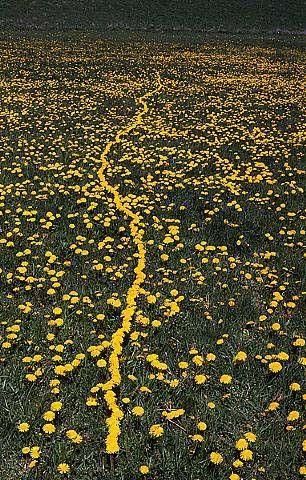 Andy Goldsworthy -  « chaque œuvre pousse, subsiste, se dégrade — composantes intégrales d'un cycle que le photographe montre à leur point culminant, balisant le moment où l'œuvre est la plus vivante.