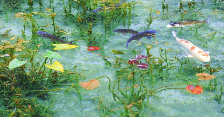 名前のない池がまるで絵画のような美しさ!その不思議な魅力まとめ