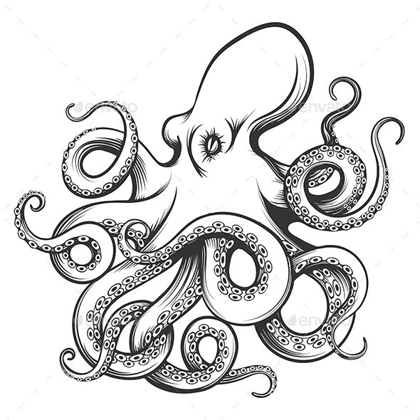 Octopus Drawn In Engraving Style Octopus Drawing Octopus Sketch