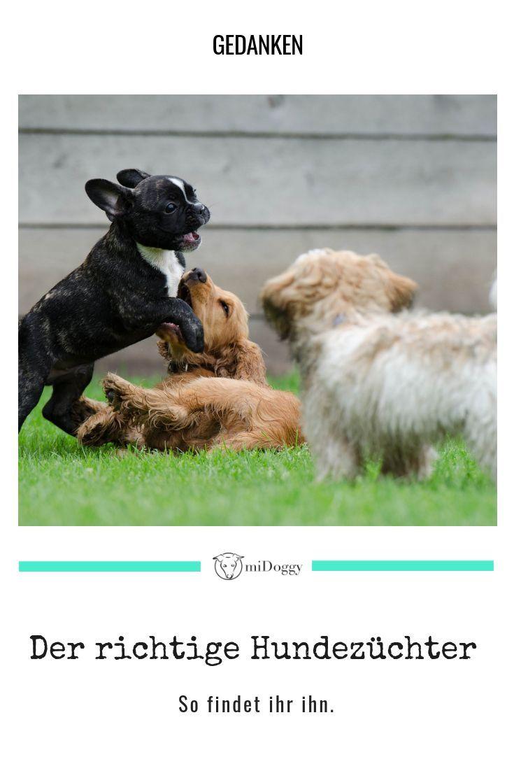 Unsere Suche Nach Dem Richtigen Zuchter Hunde Hundeverhalten Tiere