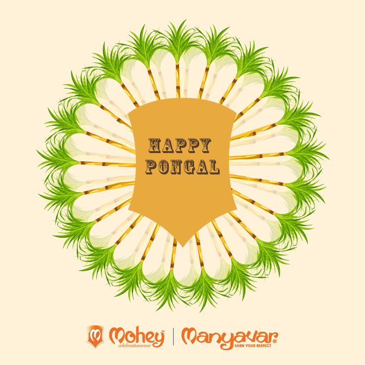Pongal delight and cheer to you and family from all of us at Mohey & Manyavar. #celebrate celebrate celebrate