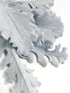{Very pleasing silver Dusty Miller Leaves by Sugar Art Studio}
