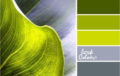 Сочетание серого и шартреза с более выраженным контрастом: Темно-зеленый с оливковым подтоном, мягкий салатовый оттенок, средне яркий шартрез и градиент от темно серого к светлому, вплоть до белого. К оттенкам зеленого можно добавить лимонные тона: он создаст эффект свечения.