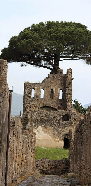 Pompeii tree growing in ruins