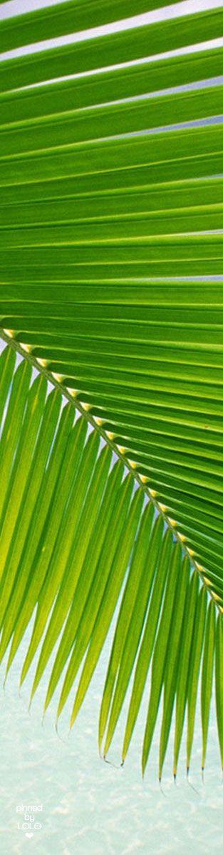 Cupro Skirt - Paradise Palm Leaves by VIDA VIDA Cheap Fashionable New Styles Sale Online Free Shipping New Styles rh8qypnhPr