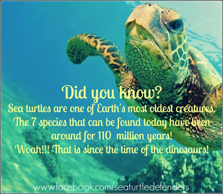 Here's an interesting fact about sea turtles. Did you know that.... #seaturtles #marinelife #ocean #oceancare #awareness #facts #trivia