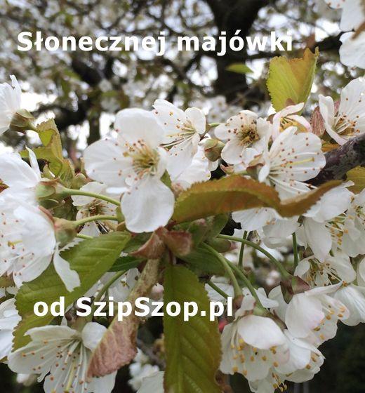 Pogodnej Majówki od SzipSzop.pl :)  https://www.szipszop.pl