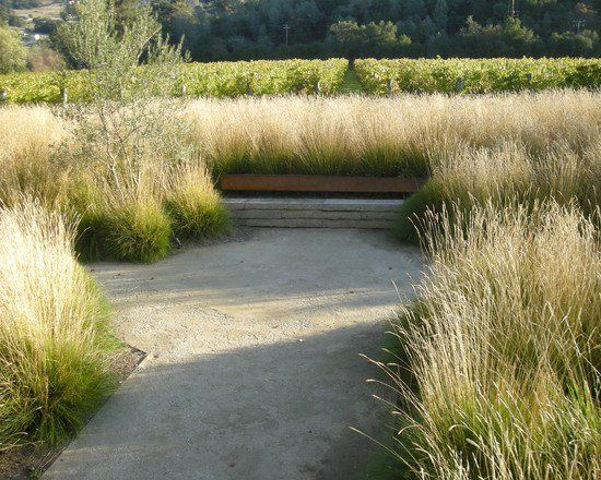 Gramin es ornementales au jardin 100 id es d 39 am nagement - Jardin de graminees photos ...
