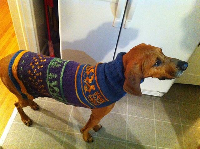 Crochet Dachshund Or Small Dog Sweater Pattern Ravelry T