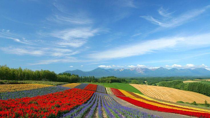 Wisata Jepang Liburan ke Pulau Hokkaido | Panduan Wisata - Berita Travel Jepang, Mungkin dari kalian semua sudah pernah ada yang ke Pulau Hokkaido