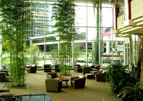 Corporate Lobby Nature Indoors Interior Office Plants Services