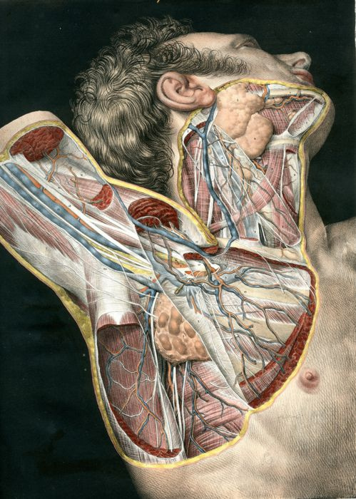 Anatomical study. N.H. Jacob with Ludovic Hirschfeld