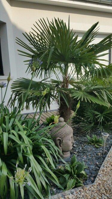 Palmier chanvre