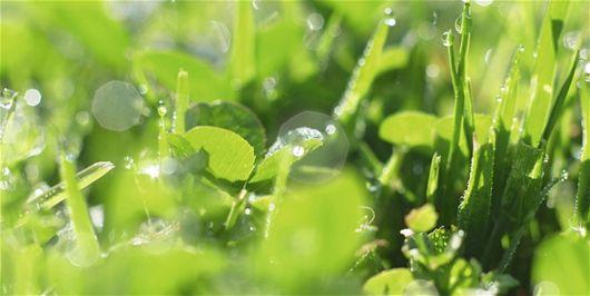 Çimenlerdeki yabani otlara karşı neler yapılabilir? - Yaz, Çimen, Çim Biçme Makinesi, Temmuz, Bakım, Bahçe İle İlgili İp...
