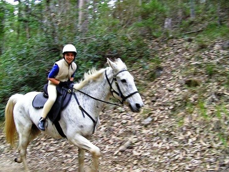 School Camp Thunderbird Park Horse Riding Mount Tamborine