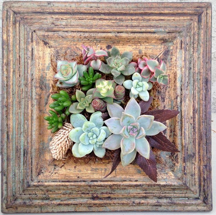 Vertical Succulent Garden | Vertical Living Succulent garden with Rustic Wood for your Table Top
