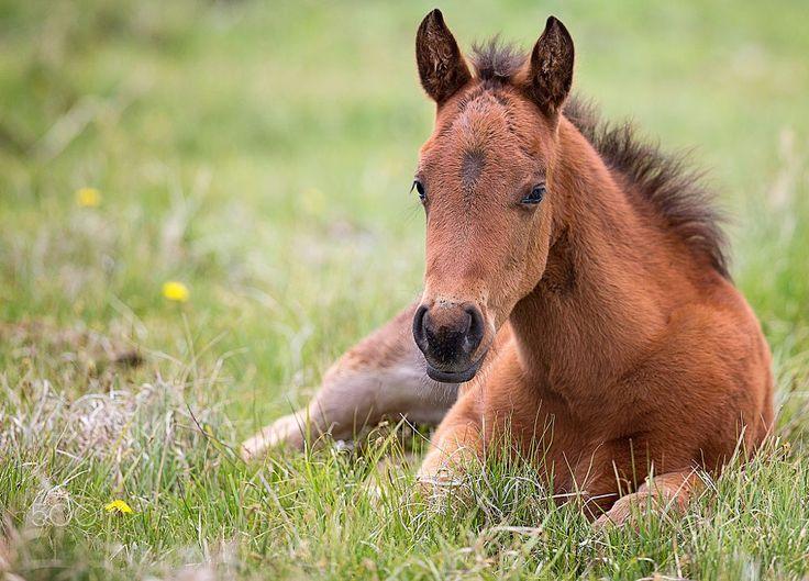 foal by Ozana Sturgeon on 500px