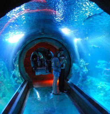 Sea Life Arizona Aquarium at Arizona Mill Mall in Tempe, Ariz. A small aquarium in a former Hi Health, still worth a visit!