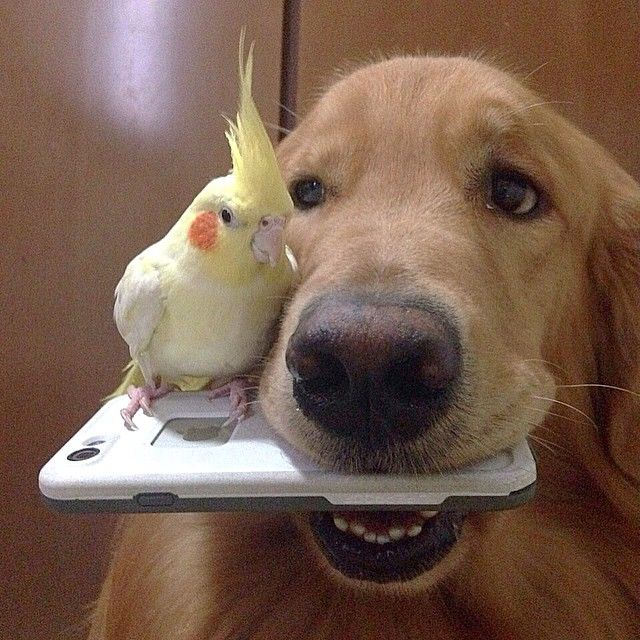 Calopsita e cachorrinho