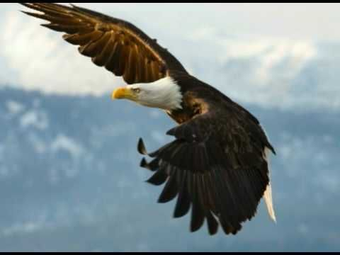 The Eagle Story -- Boy Scouts of America Eagle Scout Court of Honor Video