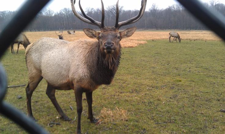 Elk grove village movie
